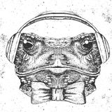 Hipster animal frog. Hand drawing Muzzle of frog Stock Photo
