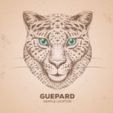 Hipster animal guepard. Hand drawing Muzzle of guepard Royalty Free Stock Images