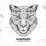 Hipster animal guepard. Hand drawing Muzzle of guepard Stock Photography