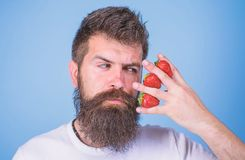 Hipster beard mustache thoughtful face think berries. Man bearded hipster hold hand with strawberries near face. Strawberry on my mind. Man can not think about stock photo
