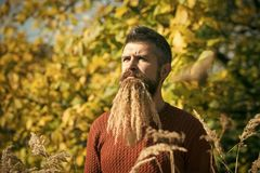 Hipster or bearded guy in autumn nature outdoor. Royalty Free Stock Photos