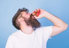 Hipster bearded holds strawberries in fist as juice bottle. Fresh juice concept. Man bearded drinks strawberry juice. Blue background. Man strict face enjoy stock image