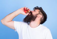 Hipster bearded holds strawberries in fist as juice bottle. Fresh juice concept. Man bearded drinks strawberry juice. Blue background. Man strict face enjoy stock images