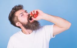 Hipster bearded holds strawberries in fist as juice bottle. Man bearded drinks strawberry juice blue background. Man. Strict face enjoy extra fresh drink royalty free stock photo