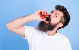 Hipster bearded holds strawberries in fist as juice bottle. Man bearded drinks strawberry juice blue background. Man. Strict face enjoy extra fresh drink royalty free stock photos