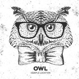 Hipster bird owl. Hand drawing Muzzle of bird owl Stock Photography