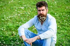 Hipster on calm face sits on grass. Natural hair care concept. Guy looks nicely with daisy or chamomile flowers in beard. Man with long beard and mustache Royalty Free Stock Photography