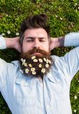 Hipster on calm sleeping face lays on grass, top view. Man with beard and mustache enjoys spring, meadow background. Guy. Looks nicely with daisy or chamomile royalty free stock photo