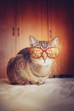 Hipster Cat Stock Image