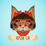 Hipster cat portrait Stock Images