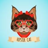 Hipster cat portrait Stock Images