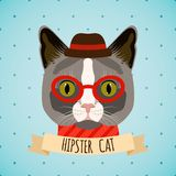 Hipster cat portrait Royalty Free Stock Images