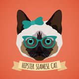 Hipster cat portrait Stock Photos