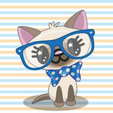 Hipster Cat Stock Images