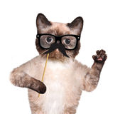 Hipster cat Royalty Free Stock Photography