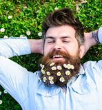 Hipster on cheerful face lays on grass, top view. Springtime concept. Guy looks nicely with daisy or chamomile flowers. In beard. Man with long beard and Stock Image