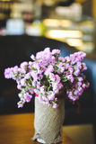Hipster chrysanthemum purple in pot Stock Photos