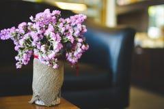 Hipster chrysanthemum purple in pot Royalty Free Stock Photo