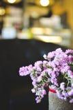Hipster chrysanthemum purple in pot Stock Image
