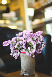 Hipster chrysanthemum purple in pot Royalty Free Stock Image
