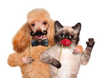 Hipster dog and cat. Stock Image