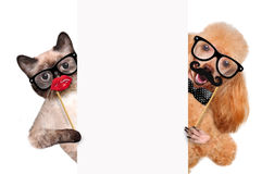 Hipster dog and cat. Stock Images
