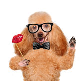 Hipster dog Stock Photos