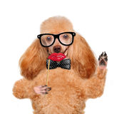 Hipster dog Stock Images