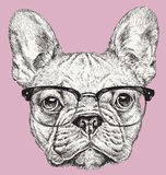 Hipster Geek French Bulldog vector illustration Royalty Free Stock Photo
