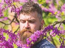 Hipster geniet van de lente dichtbij violette bloesem Mens met baard en snor op strikt gezicht dichtbij bloemen op zonnige dag ge stock fotografie