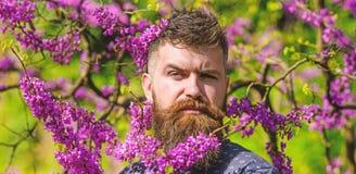 Hipster geniet van de lente dichtbij violette bloesem Mens met baard en snor op strikt gezicht dichtbij bloemen op zonnige dag royalty-vrije stock afbeelding