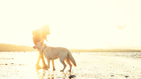 Hipster girl playing with dog at a beach during sunset, strong lens flare effect royalty free stock photos