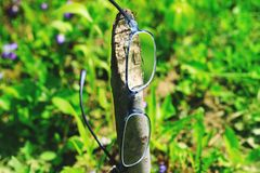 Hipster glasses hanging in tree trunk. Fancy optometry glasses in green grass and violet flowers. Conceptual picture for poor. Vision or myopia treatment royalty free stock images