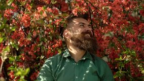 Hipster in green shirt near branches of red tree. Man with beard and mustache on smiling face near flowers. Bearded man. With stylish haircut with flowers of stock video