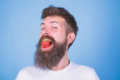 Hipster happy face enjoy juicy ripe red strawberry. Man handsome hipster with long beard eating strawberry. Berry in stock images