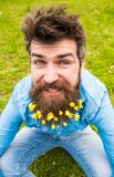 Hipster on happy face sits on grass, defocused. Man with beard enjoys spring, green meadow background. Guy with lesser. Celandine flowers in beard taking selfie stock image