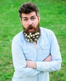 Hipster on happy surprised face stand on grass, defocused. Natural beauty concept. Guy looks nicely with daisy flowers. In beard. Man with beard and mustache Stock Image