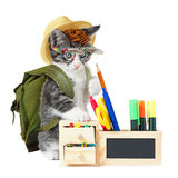 Hipster kitty Stock Image