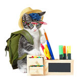 Hipster kitty Stock Photography