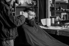 Hipster lifestyle concept. Hipster client getting haircut. Barber with hair clipper work on hairstyle for hipster. Barbershop background. Barber with clipper stock photography