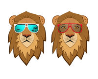 Hipster Lion with sunglasses Stock Images