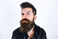 Hipster looks surprised and suspicious while raising his eyebrow. Masculinity concept. Man with beard and mustache on. Strict face looking at camera. Macho Royalty Free Stock Photo