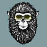 Hipster monkey with yellow sunglasses. Hipster Burmese monkey  with yellow sunglasses.Vector illustration Stock Image