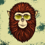 Hipster monkey with yellow sunglasses. Hipster Burmese monkey  with yellow sunglasses.Vector illustration Royalty Free Stock Image