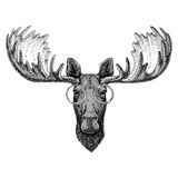Hipster moose, elk wearing glasses Image for tattoo, logo, emblem, badge design. Hipster moose, elk Picture for tattoo, logo, emblem badge design stock images