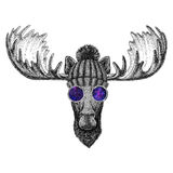 Hipster moose, elk wearing knitted hat and glasses Image for tattoo, logo, emblem, badge design. Hipster moose, elk Picture for tattoo, logo, emblem badge design royalty free stock images