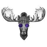 Hipster moose, elk wearing knitted hat and glasses Image for tattoo, logo, emblem, badge design Royalty Free Stock Images
