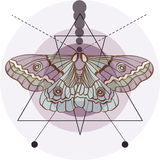 Hipster old fashion background with moth. And geometric elements Stock Images
