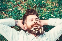 Free Hipster On Peaceful Face Lays On Grass, Top View. Guy Looks Nicely With Daisy Or Chamomile Flowers In Beard. Man With Royalty Free Stock Photos - 142607748