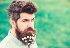 Hipster op verdacht gezicht, grasachtergrond, exemplaarruimte Het concept van de de lenteversheid De mens met baard en de snor ge royalty-vrije stock afbeeldingen